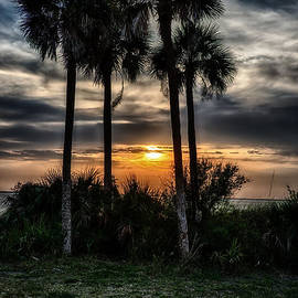 Palms at Sunet by Michael White