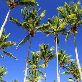 Palms on blue sky by Elena Elisseeva