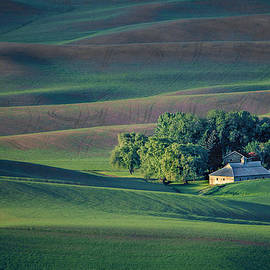 Nikolyn McDonald - Palouse - Washington - Farms - #3