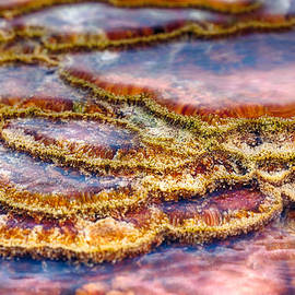 Scott Campbell - Pancakes Hot Springs