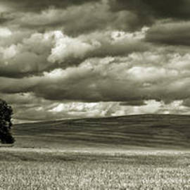 Frank Pali - Panoramic lonely tree