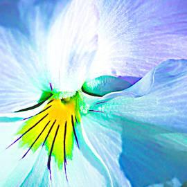 Alexander Senin - Pansy Flower 6