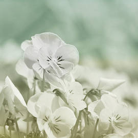 Pansy Flowers by Kim Hojnacki