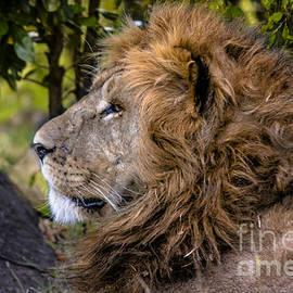 Gary Keesler - Panthera Leo