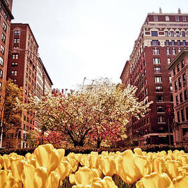 Park Avenue in the Spring  by Vivienne Gucwa