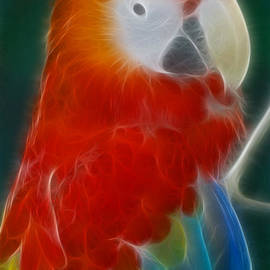 Gary Gingrich Galleries - Parrot-6141-Fractal