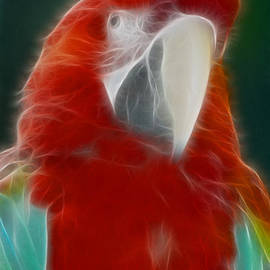 Gary Gingrich Galleries - Parrot-6164-Fractal