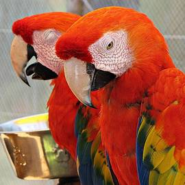 MTBobbins Photography - Parrot Expressions