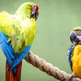 Parrot Talking by Jijo George