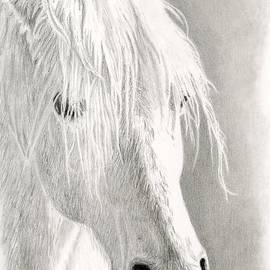 Sarah Batalka - White Horse- Paso Fino
