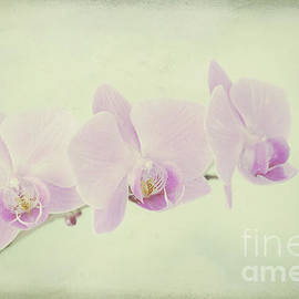 Pastel Orchids by Alana Ranney