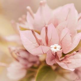 Julie Palencia - Pastel Paper Flower Bougainvillea