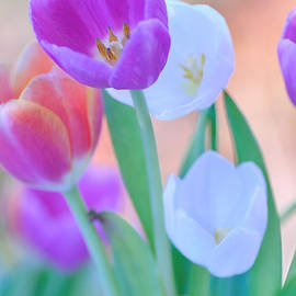 Pastels of Spring by Kaye Menner