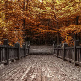 Scott Norris - Path to the Wild Wood