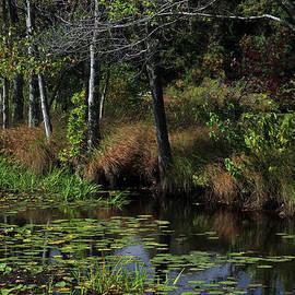 Peaceful Pond by Karol Livote