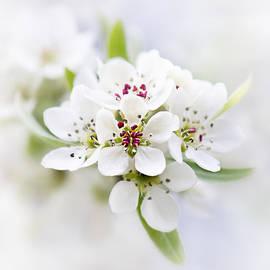 Sarah-fiona Helme - Peach Blossom