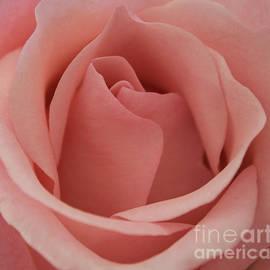 Arlene Carmel - Peach Rose