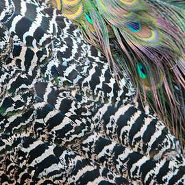 Cynthia Guinn - Peacock Feathers
