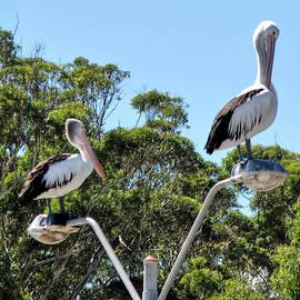 Pecking Order by Paul Svensen