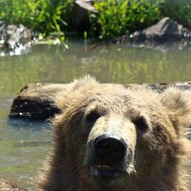 Dora Miller - Peek-a-Boo Bear