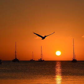 Kerry Hauser - Pelican and Boats Sunset