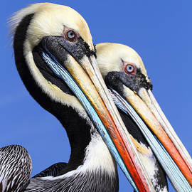 Pelican Perfection by James Brunker
