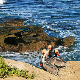 Gabriele Pomykaj - Pelicans On the Cliff - La Jolla Cove