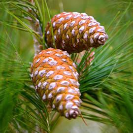 Deb Halloran - Pending Pines