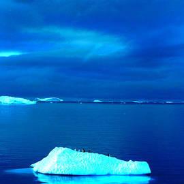 Amanda Stadther - Penguin on Iceberg