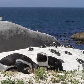 Penguins on Boulder Beach by Barbie Corbett-Newmin