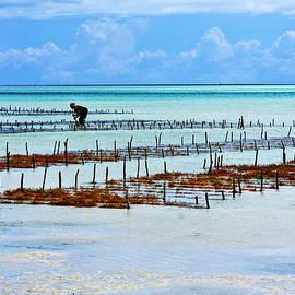 Aidan Moran - People Of The Sea - Zanzibar Island - Tanzania