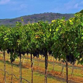 Perissos Hill Country Vineyard by Kristina Deane
