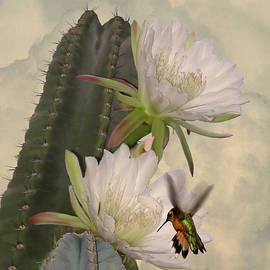 Peruvian Apple Cactus Flowers and Hummingbird by Spadecaller