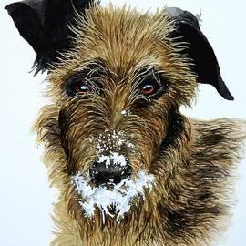 Pet Portraits now Available by C Robert Follett