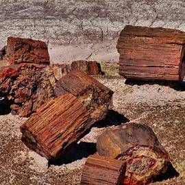 Dan Sproul - Petrified Wood