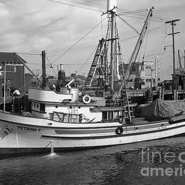 Petrina F Purse Seiners Monterey circa 1947 by California Views Archives Mr Pat Hathaway Archives