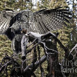 Wildlife Fine Art - Phantom of the North