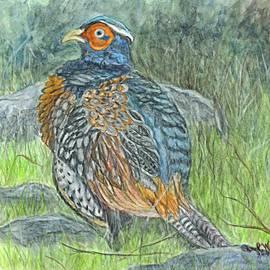 Carol Wisniewski - Pheasant Common Male