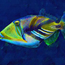 Jane Schnetlage - Picasso Triggerfish