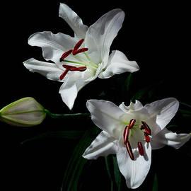 Pick-a-lily by Paul Indigo
