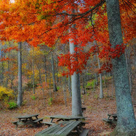 Lynn Bauer - Picnic Paradise
