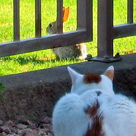 Pico Watching by Phyllis Kaltenbach