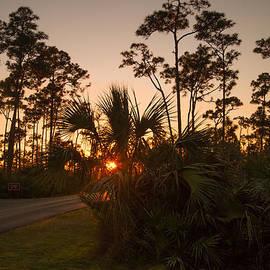 Pine Glades Sunset by Doug McPherson