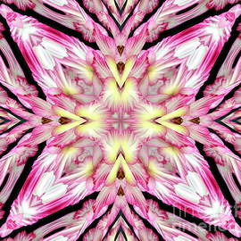 Pink and Yellow Gladioli Abstract by Rose Santuci-Sofranko