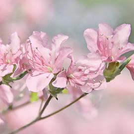 Pink Azalea Flowers in the Spring by Jennie Marie Schell