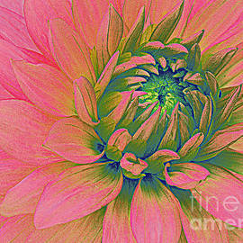 Pink Dahlia Pop Art by Dora Sofia Caputo Photographic Design and Fine Art