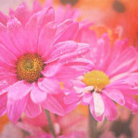 Pink Daisy by Robin Koza