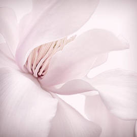 Shy Pink Magnolia Blossom  by Jennie Marie Schell