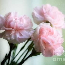 Pink Mini-Carns by Sharon Johnston