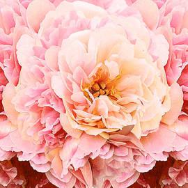 Pink Peony by Michele Avanti